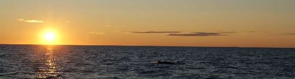 A Mink whale at sunset